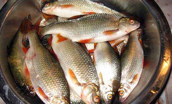 Как правильно засолить речную рыбу для сушки
