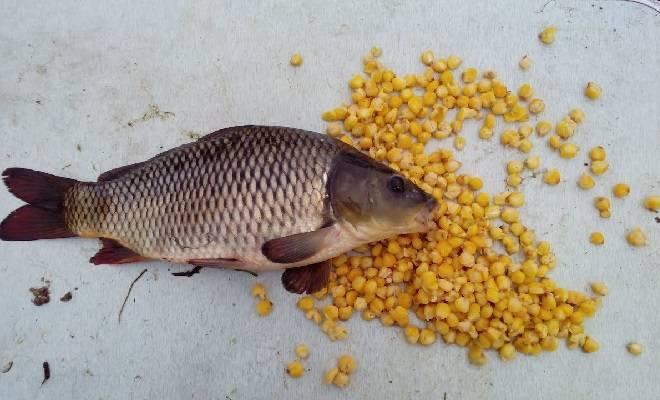 Как приготовить кашу для рыбалки