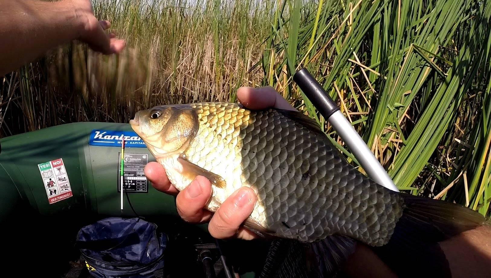 Как правильно ловить на поплавочную удочку - видео