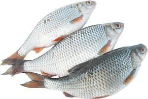 Рыба сорога обыкновенная