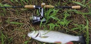Ловля различной рыбы спиннингом