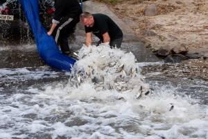 Зарыбление водоема