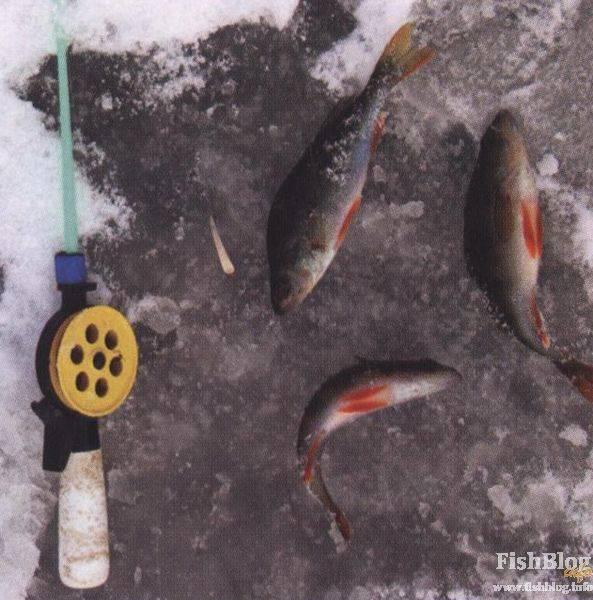 Лески для ловли окуня зимой