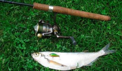 Рыба рядом со спиннингом