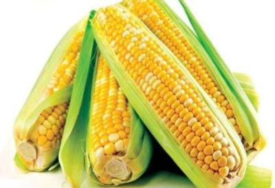 Ферментация кукурузы для рыбалки
