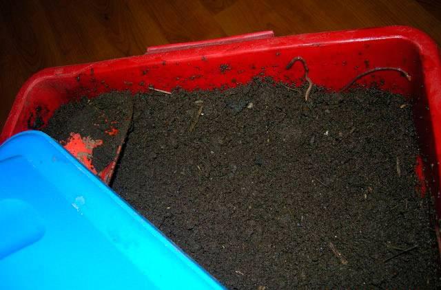 Чем подкармливать червей в домашних условиях