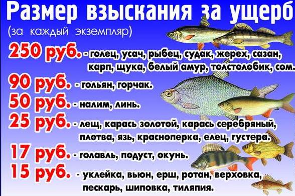 Новое в любительской рыбалке правила ограничения ловли
