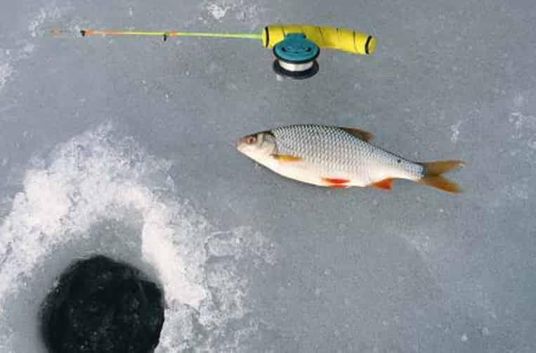 Зимняя рыбалка плотва прикормки