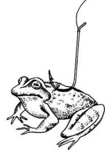Лягушка на крючке