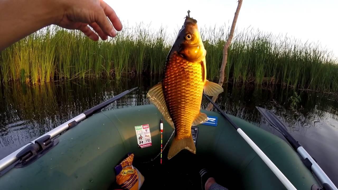 Как поймать крупного карася на поплавочную удочку