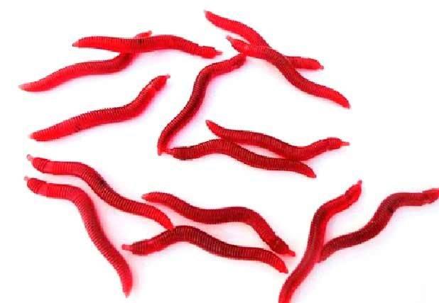 Хранение червей для рыбалки