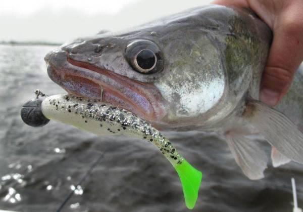 Специфика ловли судака на джиг осенью - в сентябре, октябре и ноябре