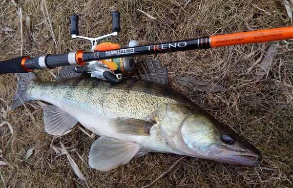 Спиннинг для ловли судака на джиг осенью