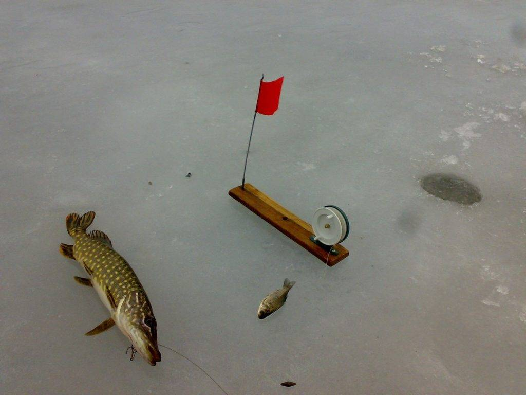 эта тупая рыбалка на жерлицы зимой видео твоё мать