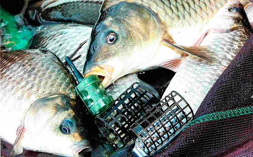 Уроки фидерной ловли для начинающих новичков - выбор фидера, устройство снасти и техники рыбалки на фидер