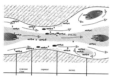 Рис.1. Схема переката и расположение рыбы.