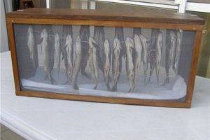 Рыба на балконе