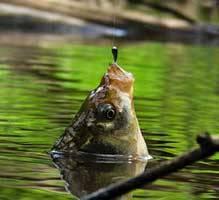 Какое оптимальное давление для рыбалки