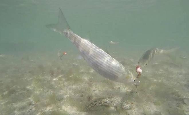 Рыбалка на кефаль в чёрном море