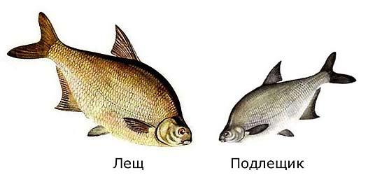 Vneshnie-otlichiya-letha-ot-krupnogo-podlethika