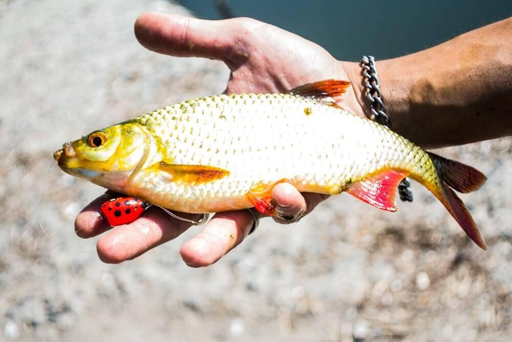 Рыбалка на попла поппер
