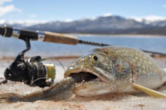 Большая рыба с маленькой во рту