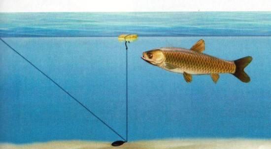 Как поймать амура