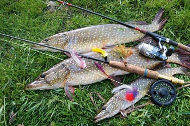 Атмосферное давление норма для рыбалки