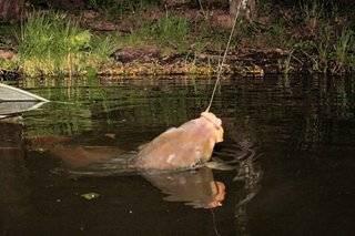 Ловля карпа на поплавок летом видео