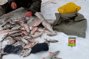 Отзывы fish hungry