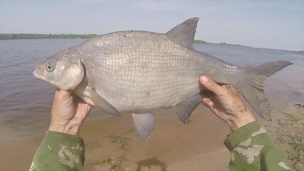 Рыбалка на донку с берега видео