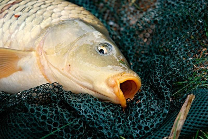 Ловля рыбы на пробку